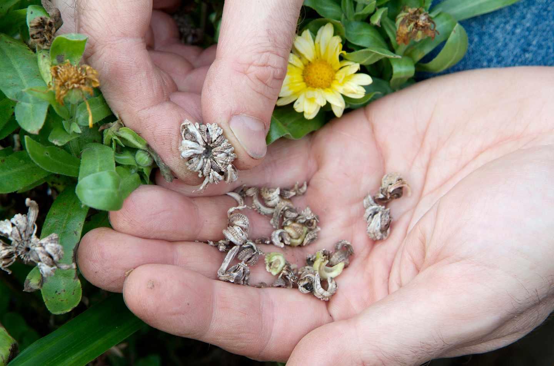 Физиологические и экономические факторы сбора и хранения семян