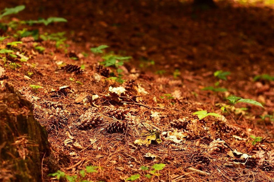 Ферментативная активность почв