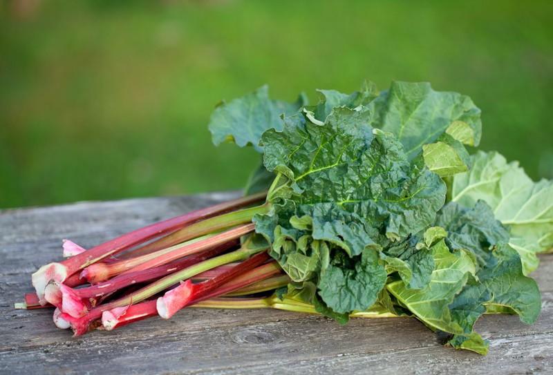 Ранее выращивание овощей: ревень