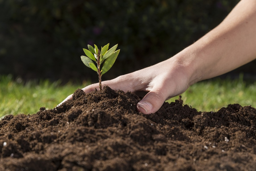 Плодородие почвы