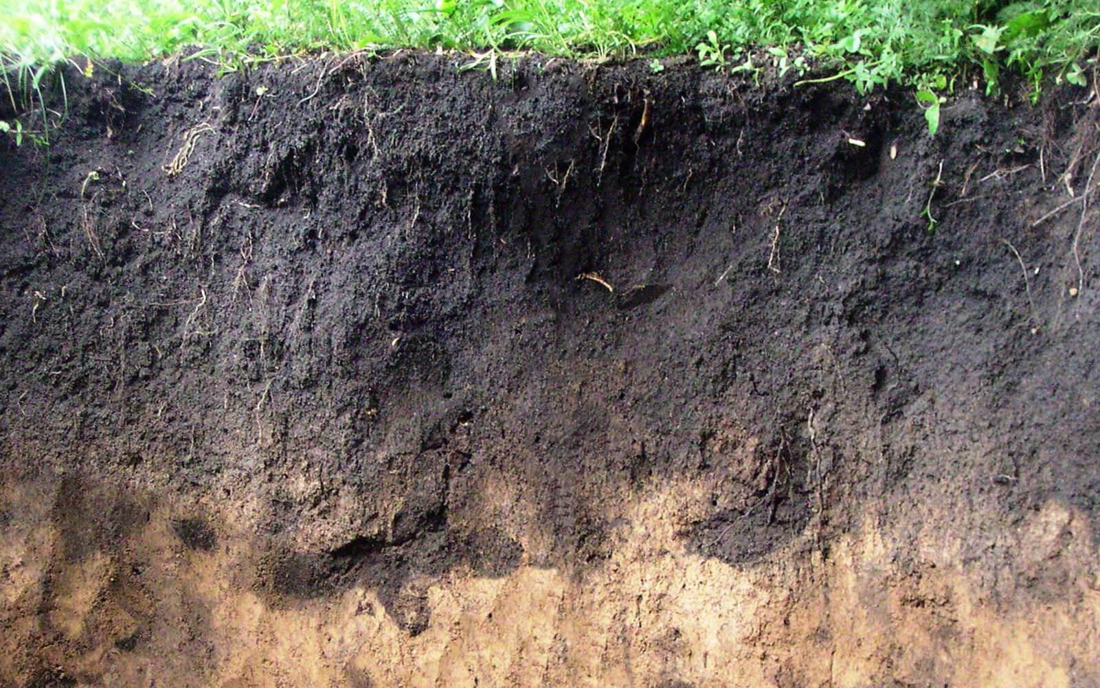 Структура и физико-механические свойства почвы