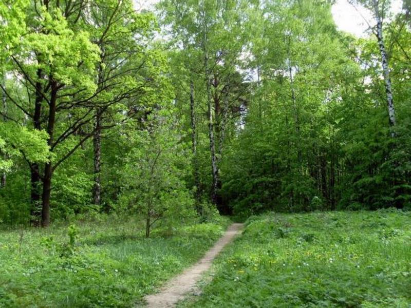 Фенологические наблюдения и учет плодоношения