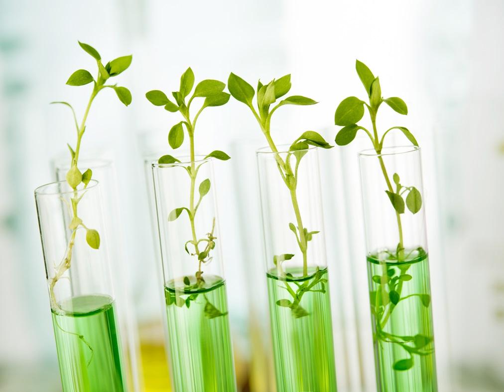 Микроклональное размножение цветочных культур