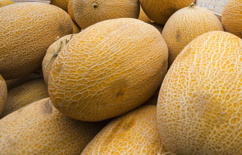Классификация бахчевых культур - Дыня