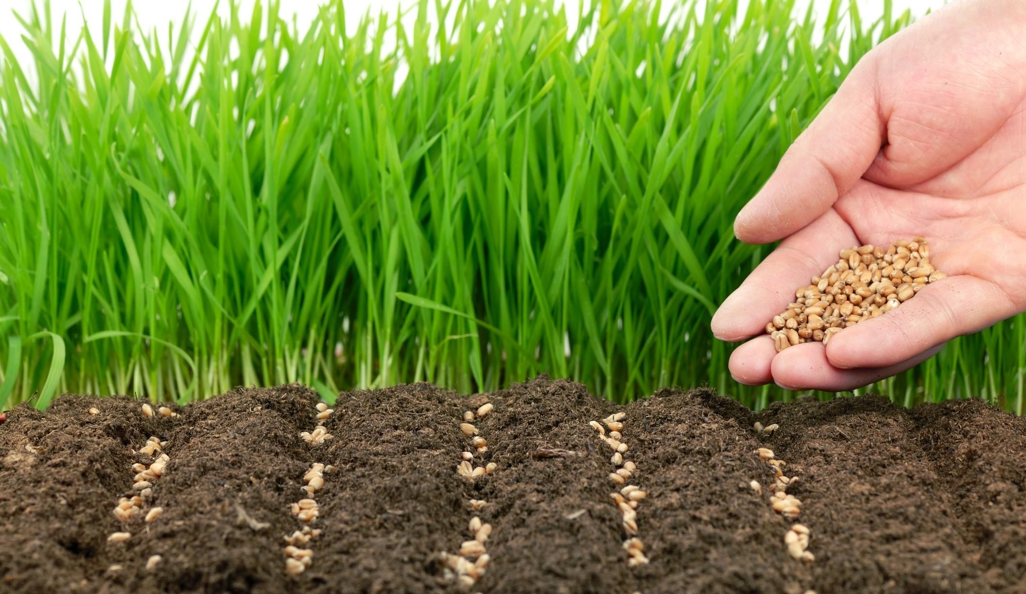 Основные правила использования удобрений