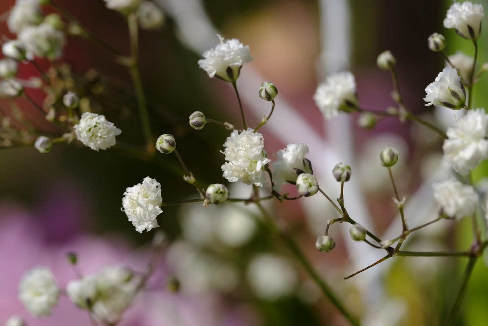 А как бы нам цветник в саду перепланировать