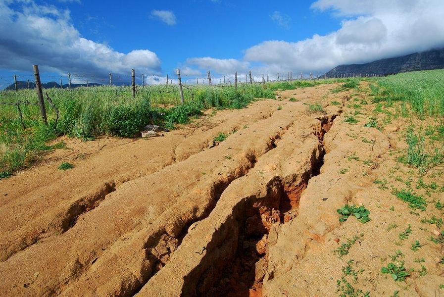 Экологические функции почвы