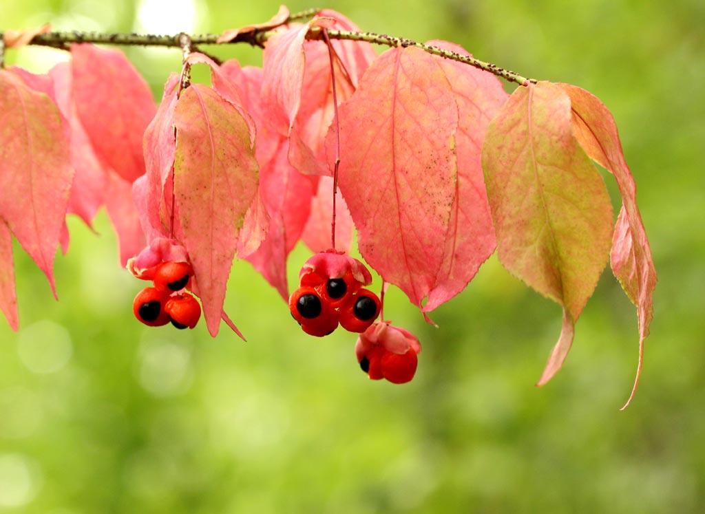 Особенности сбора, обработки и хранения плодов и семян лиственных