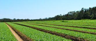 биологическое и ландшафтное растениеводство