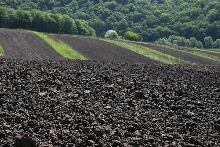 Черноземы южной лесостепи и степной зоны