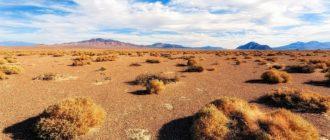 Каштановые почвы зоны сухих степей