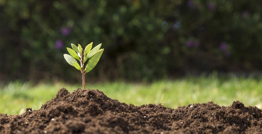 Магнитные свойства почв