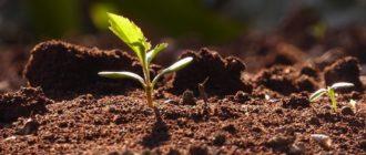 Органическое вещество почвы