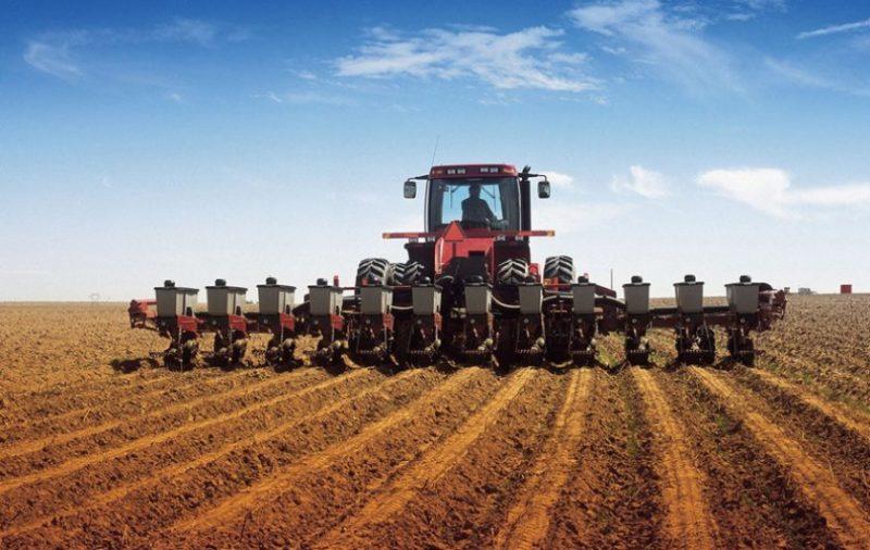 Биологические особенности озимой пшеницы