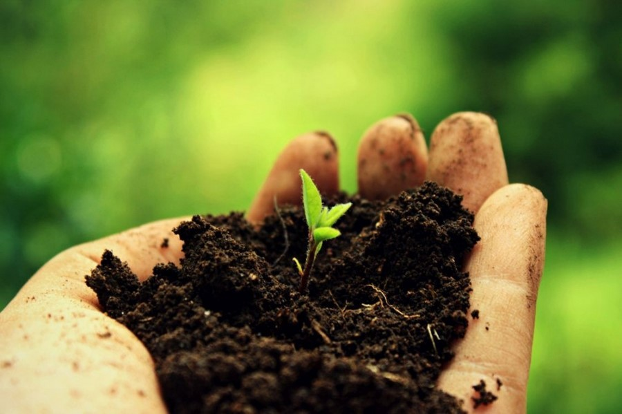 Тепловые свойства и тепловой режим почв