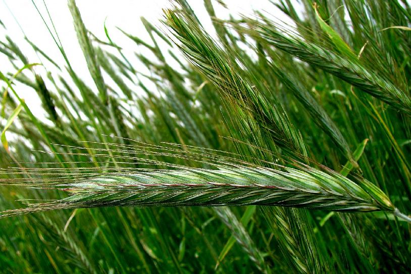 Влияние систем обработки почвы в сочетании с удобрениями на содержание гумуса и подвижной P2O5 в черноземе южном предгорно-степного Крыма