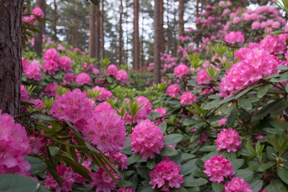 Декоративные качества растений