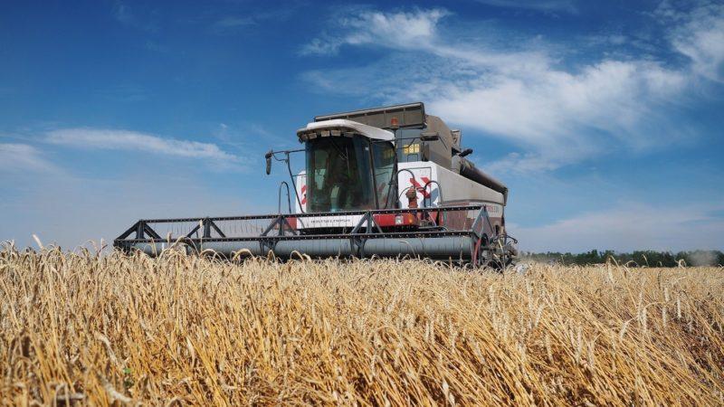 Технология получения высоких урожаев озимой пшеницы