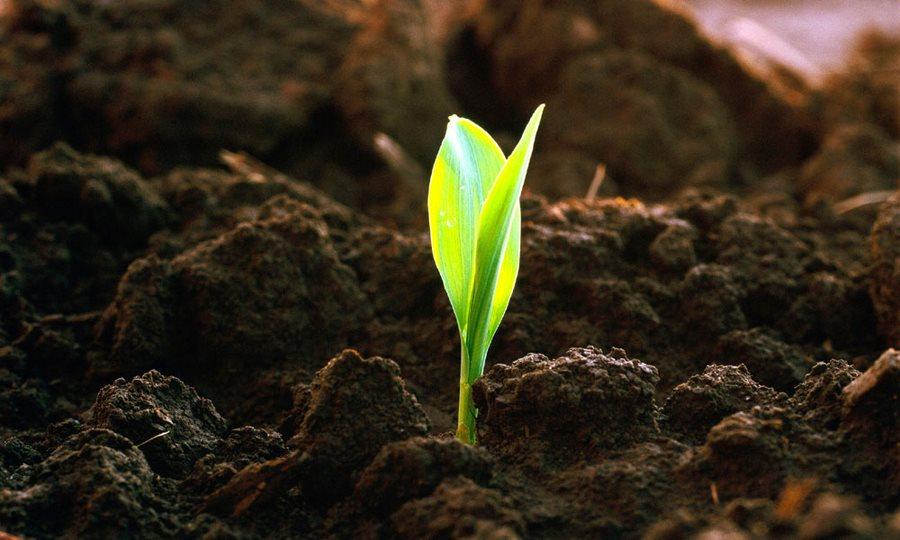 Морфологические признаки почв