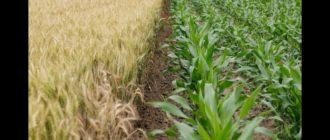 Классификация кормовых культур