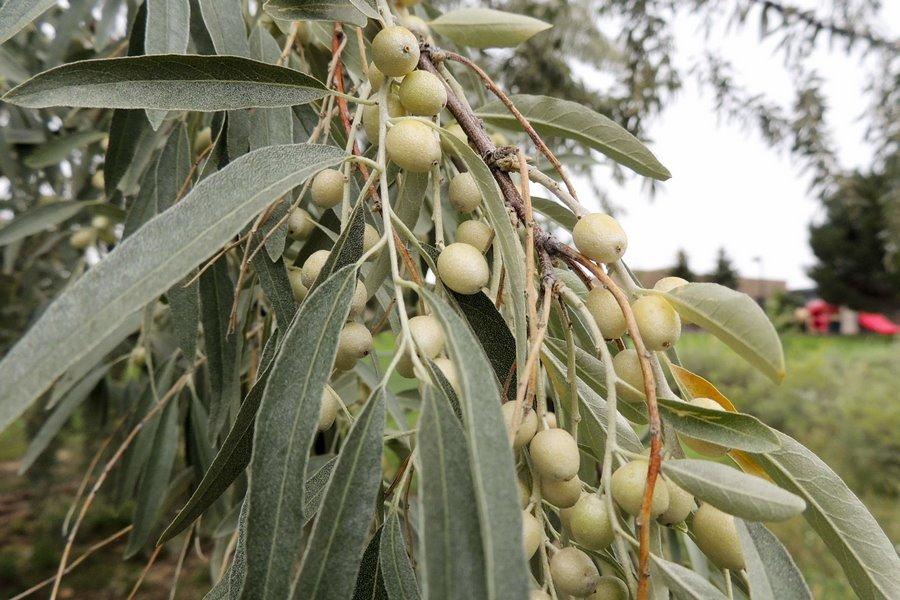 Набухание семян и роль оболочек