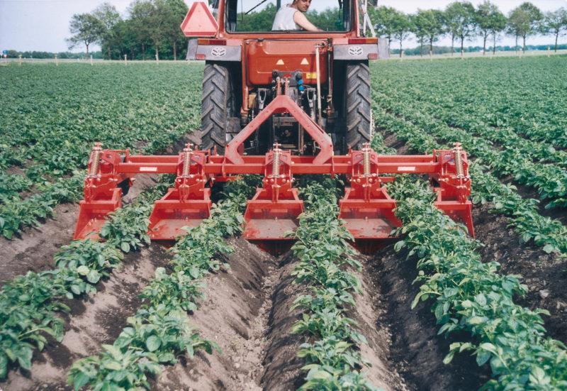 Выращивание растений без вирусных инфекций