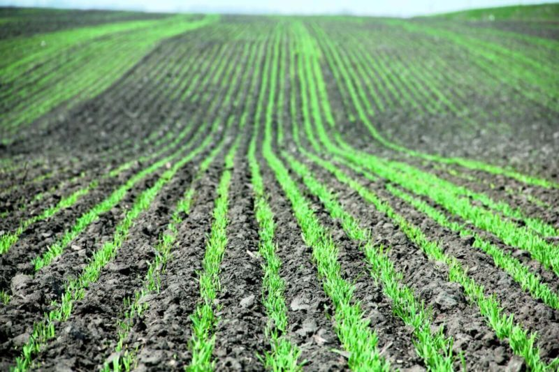 К вопросу о биологическом обосновании принципов создания механизмов для отбора и посева сельскохозяйственных растений