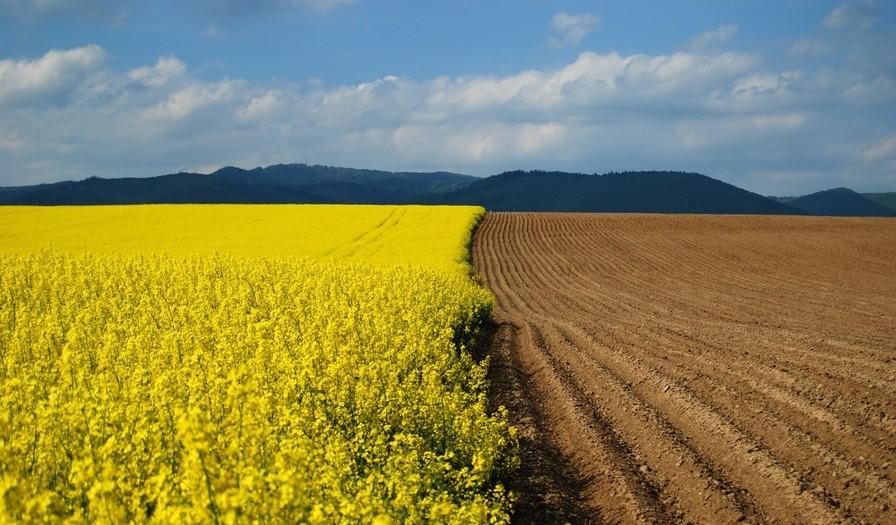 Химический состав почв. Основные питательные элементы для растений. Микроэлементы