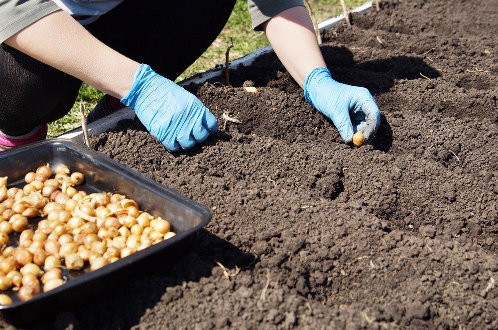 Подзимние, озимые и зимние посевы овощей