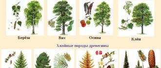 Свойства семян древесных и кустарниковых пород