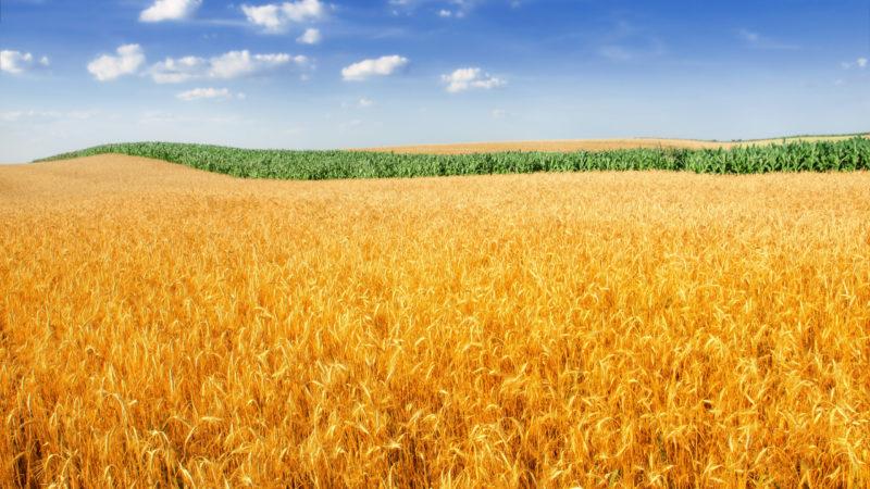 Экосистемная структура ландшафтного растениеводства