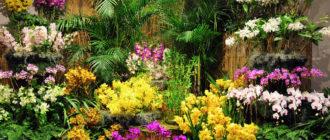 Размножение цветочных растений открытого и защищенного