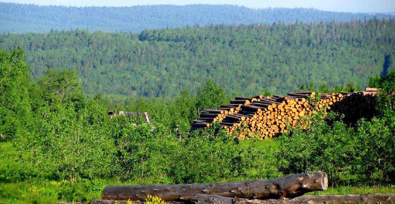 Организация лесосеменной базы
