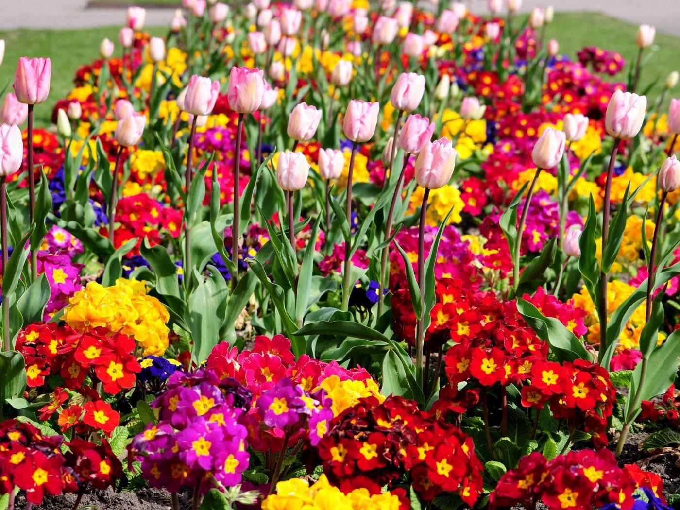 Размножение цветочных растений открытого и защищенного способов