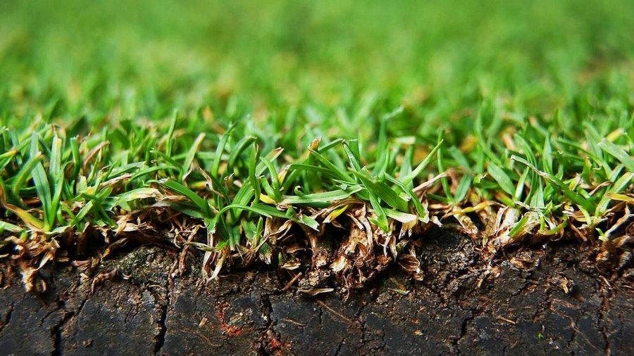 Дерновые почвы