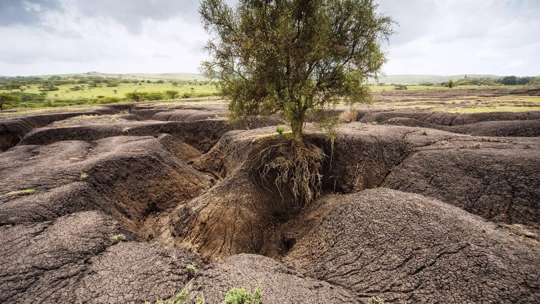 Эрозия почв и меры борьбы