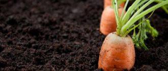 Агропроизводственная группировка почв и земель