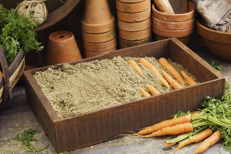 Хранение корнеплодов овощей
