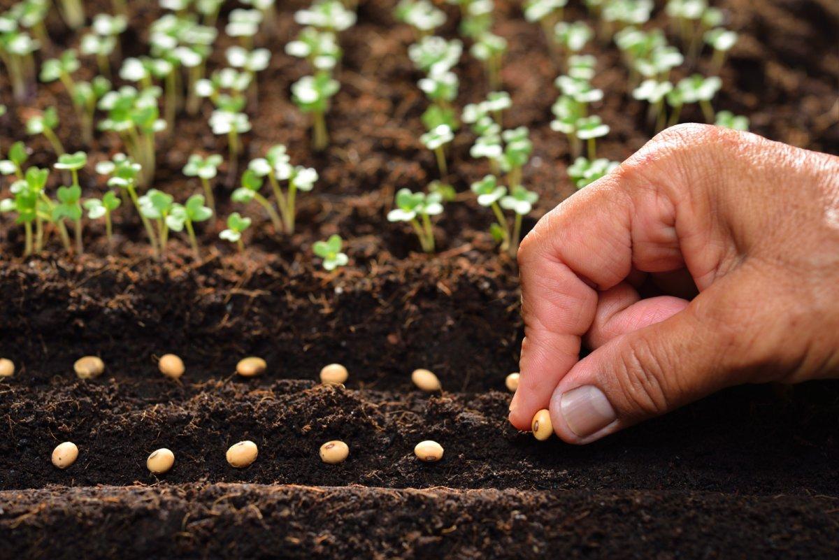 Семенное размножение цветочных культур