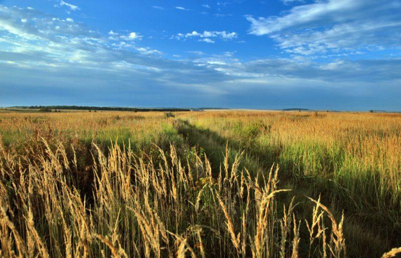 Ландшафты и агроценозы