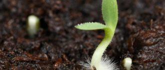 Важнейшие факторы прорастания семян