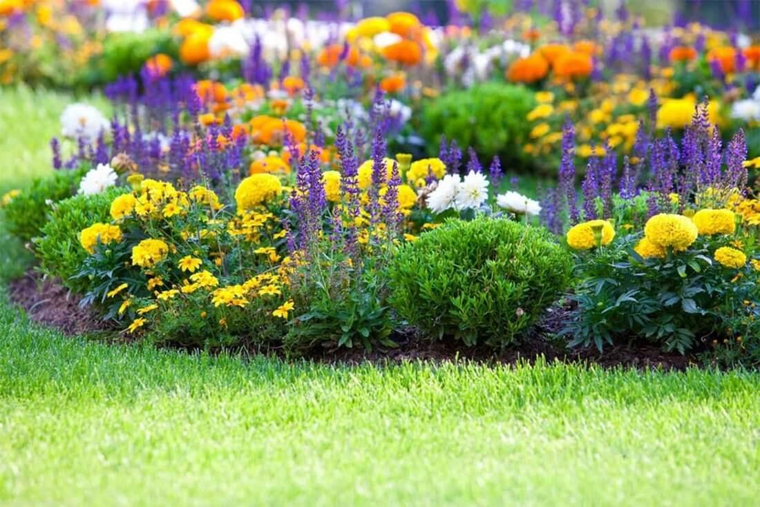 сад ароматический растений