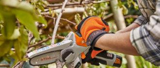 Обрезка плодовых деревьев и формирование кроны