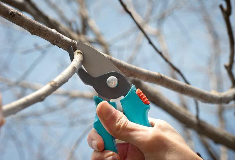 Обрезка ветвей деревьев